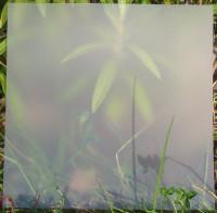 Plaque de Priplak Opaline DSP